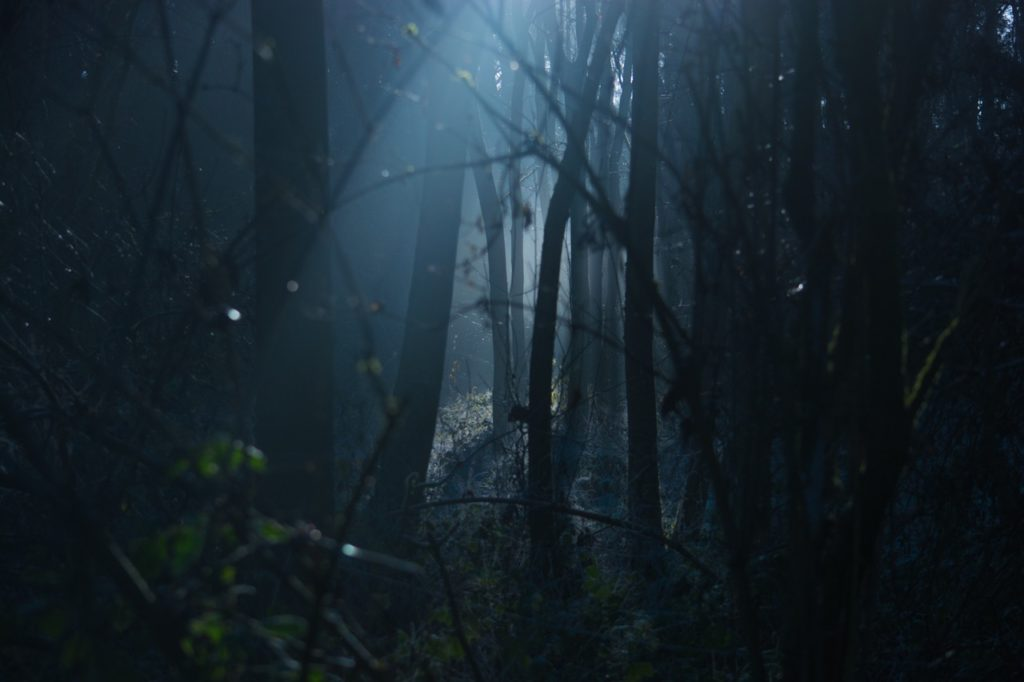 Dark forest | horror